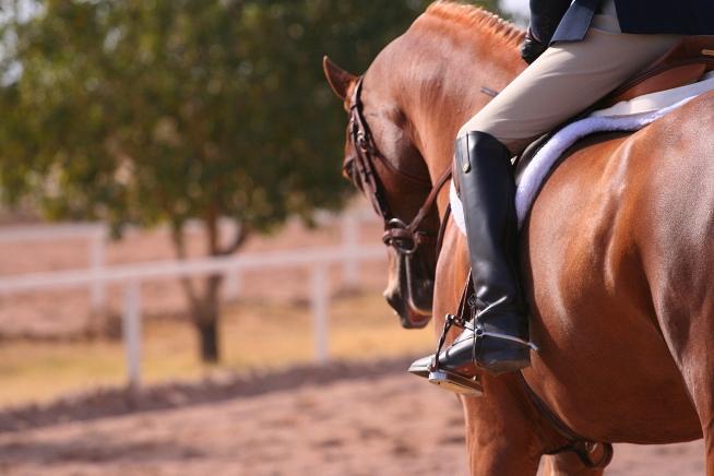 Campionato di equitazione: il programma gare
