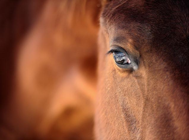 Equitazione: online gli iscritti